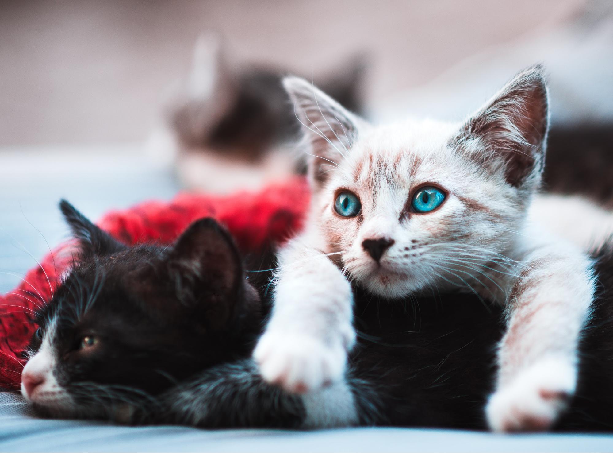 2 kittens instagram hashtags