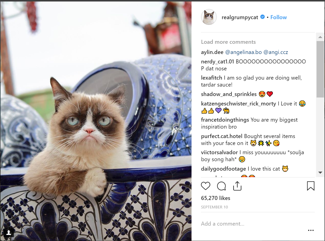 The real grumpy cat is a top instagram account