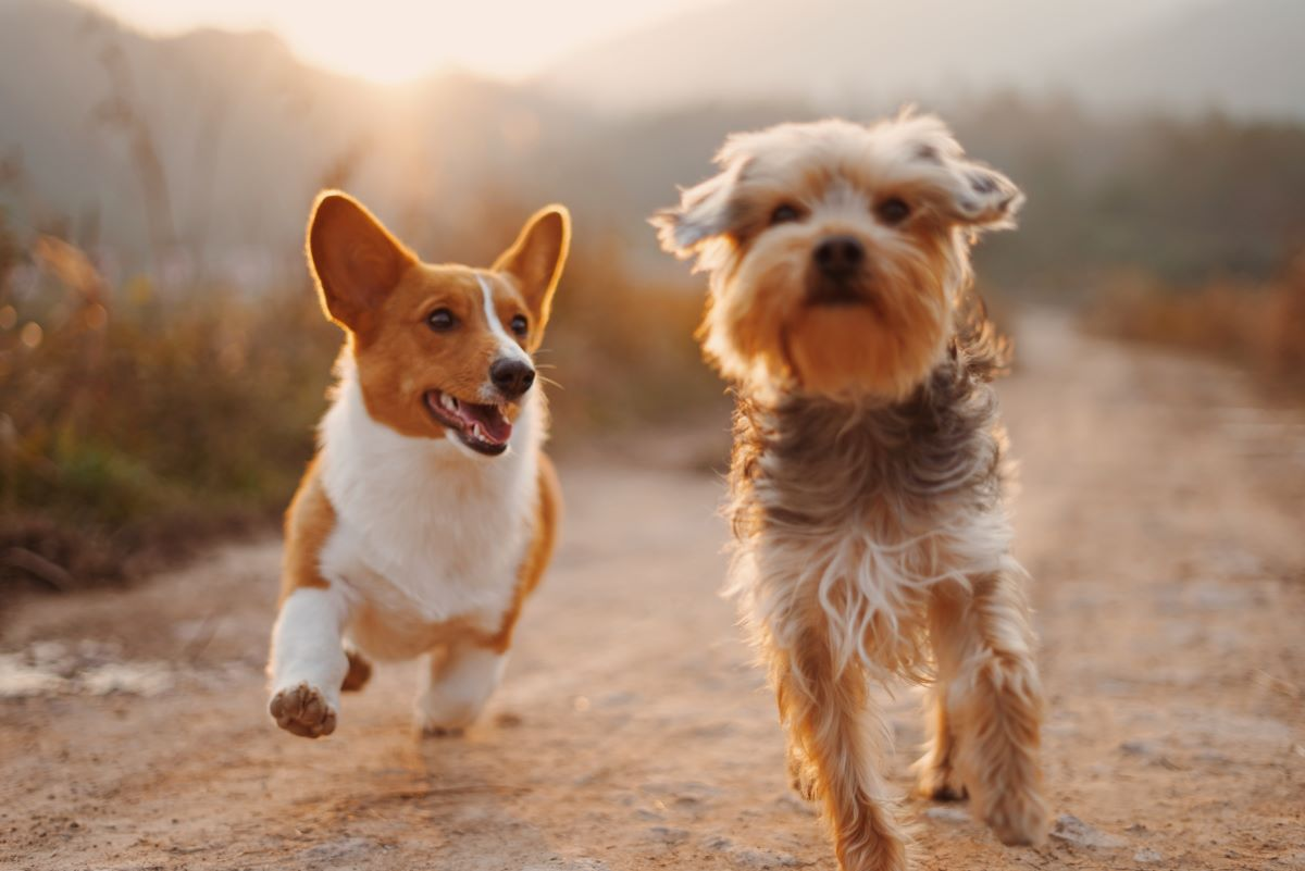Dogs running in picture with good dog hashtags